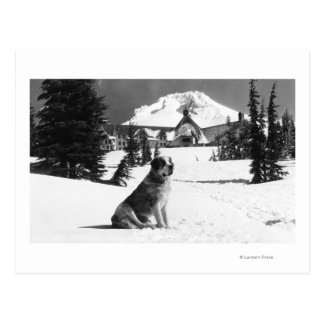 """Timberline Lodge and """"Lady"""" the owner's Postcard"""