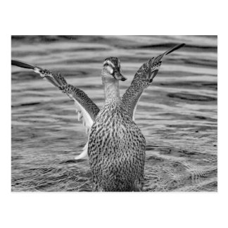 Time for a bath postcard
