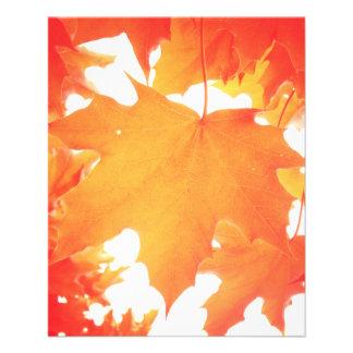 Tinted Orange Maple Leaf Flyers