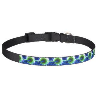 tinted pretty sunflower - blue pet collar