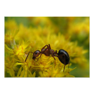 Tiny Ant on Goldenrod Poster