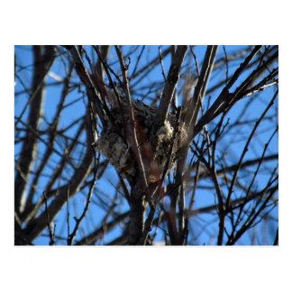 Tiny Bird Nest Postcard