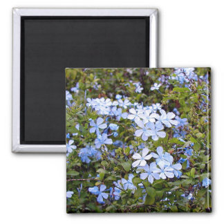 Tiny Blue Flowers Magnet