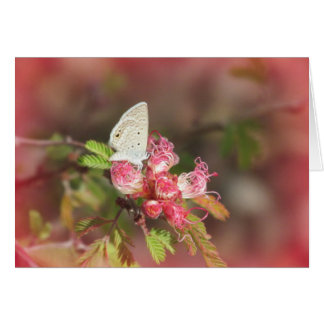 Tiny Butterfly on Pink Flower Card