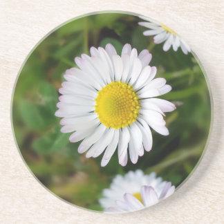 Tiny daisies coaster