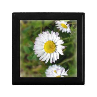 Tiny daisies gift box