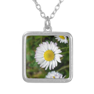 Tiny daisies silver plated necklace