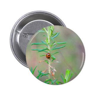 Tiny Lady Beetle Pinback Button