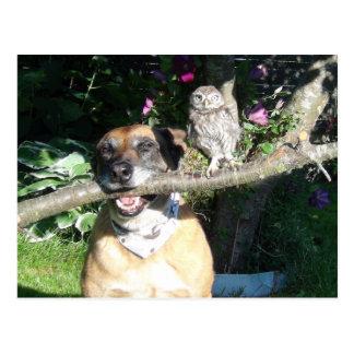 Tiny owl and big dog postcard