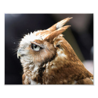 Tiny Owl Art Photo