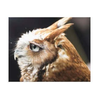 Tiny Owl Canvas Print