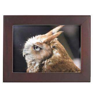 Tiny Owl Keepsake Box