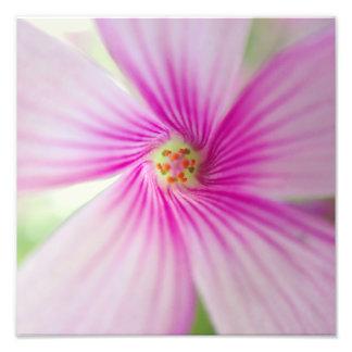 Tiny Pink Flower Photograph