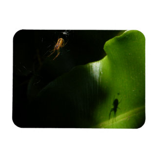 Tiny Spider Photo Magnet