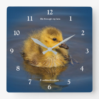 Tiny Swimmer: Canada Goose Gosling Square Wall Clock