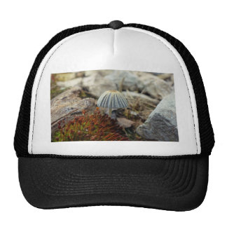 Tiny Toadstool Trucker Hat
