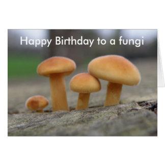 Tiny Toadstools Macro funny Fun Guy Greeting Card