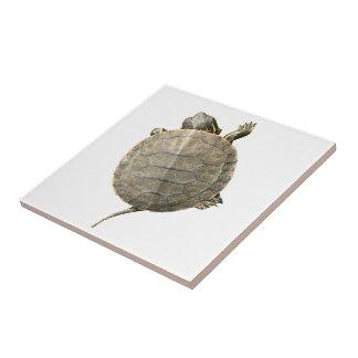 Tiny Turtle (Tortoise) Photo Tile