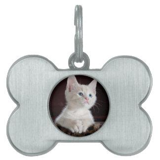 Tiny White Kitten Pet ID Tags