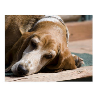 tired basset hound postcard