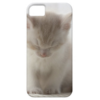 Tired Kitten Sleeping Case For The iPhone 5