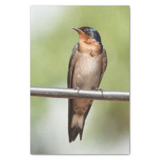 Tissue Paper with Image of Swallow