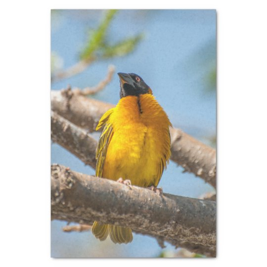 Tissue Paper with Image of Yellow Weaver Bird