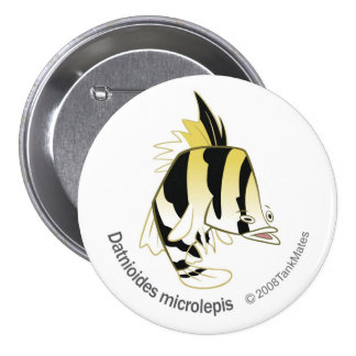 TM-12-Dathioides microlepis 3 Inch Round Button