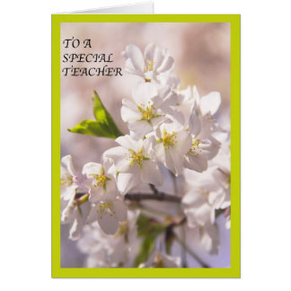 To A Special Teacher White Flowers Blossoms Card