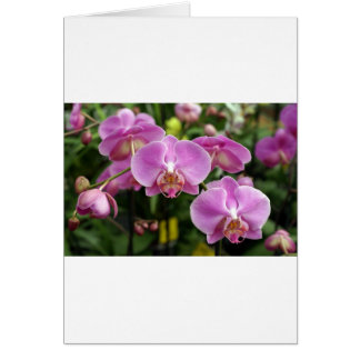 to orchid_fresh_flower card
