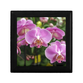 to orchid_fresh_flower gift box