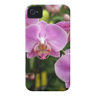 to orchid_fresh_flower iPhone 4 cover