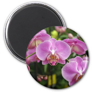 to orchid_fresh_flower magnet