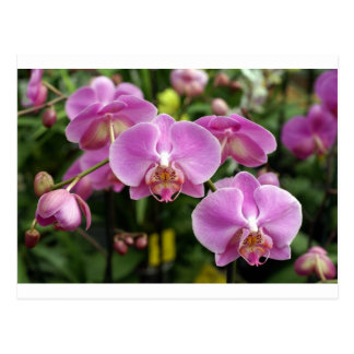 to orchid_fresh_flower postcard