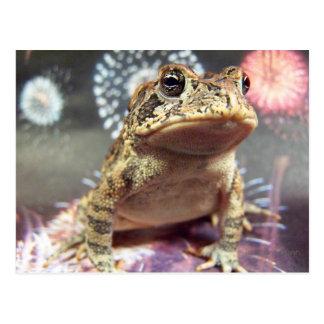 Toad frog standing up against firework background postcard