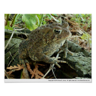 Toad on a Log Poster