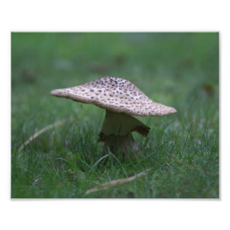 Toad Stool Photo Print.