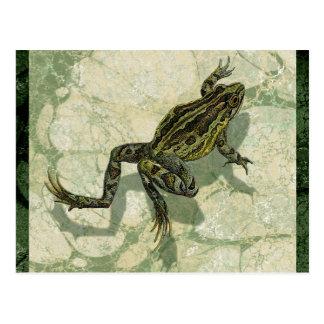Toad Swinning in the Water Postcard