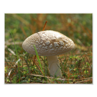 Toadstool, Photo Enlargement.