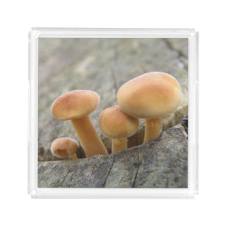 Toadstools on a Tree Trunk Acrylic Perfume Tray