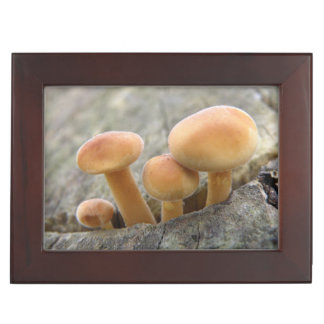 Toadstools on a Tree Trunk Keepsake Box
