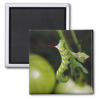 Tobacco Hornworm Caterpillar Magnet