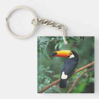 Toco Toucan Key Chain