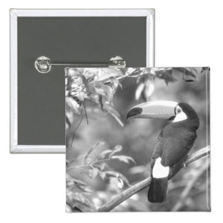 TOCO TOUCAN PHOTO BLACK AND WHITE PIN