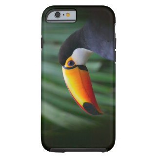 Toco Toucan (South America), Panama Tough iPhone 6 Case