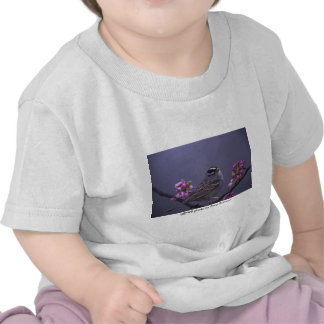 Toddler T / White-crowned Sparrow Shirts