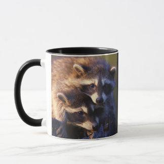 Together Forever Raccoons Mug