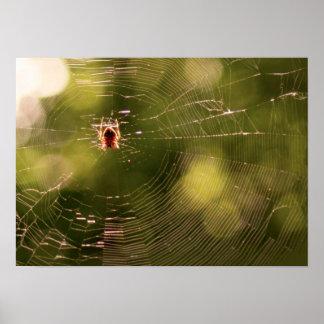 Toile d araignée affiches