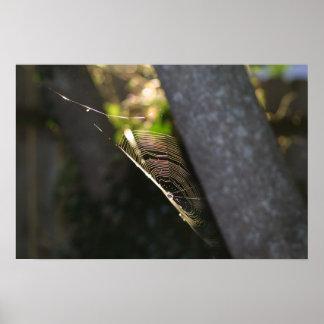 Toile d'araignée 2 posters