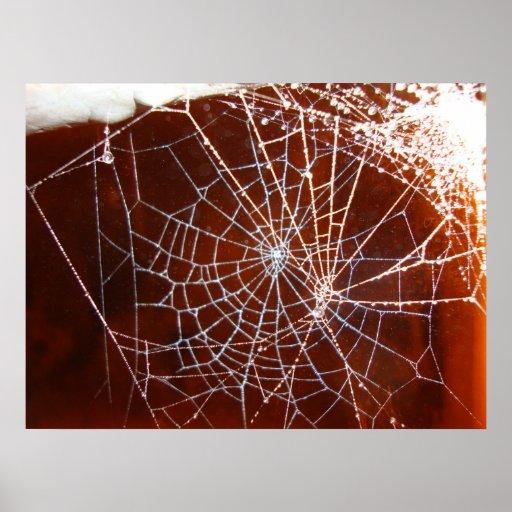 toile d'araignée à la nuit posters